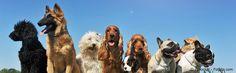 Ideen für Ihren Urlaub mit Hund gesucht? Hier preiswerte Ferienwohnung mit Hund oder komfortables Ferienhaus mit Hund finden & günstig von Privat buchen. Ferien mit Hund beginnen bei 4Pfoten-Urlaub