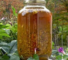 "Many decades ago, the renowned herbalist Rosemary Gladstar coined the term ""Fire Cider"" for a simple home made respiratory tonic using easy to find kitchen ingredients and apple cider vinegar (reci. Rosemary Gladstar, Apple Cider Vinegar Remedies, Musaka, Natural Antibiotics, Medicinal Plants, Natural Cures, Natural Health, Herbal Remedies, Flu Remedies"
