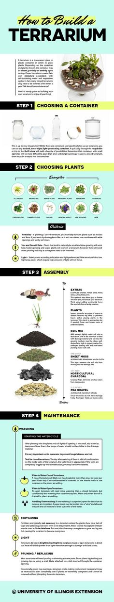 Building and maintaining a terrarium