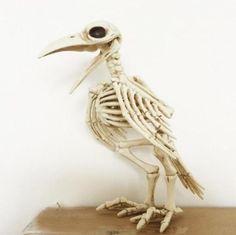 Buy IH Skeleton Raven Plastic Animal Skeleton Bones for Horror Halloween Decoration IE at Wish - Shopping Made Fun Halloween Skeleton Decorations, Halloween Party Decor, Halloween Prop, Halloween Christmas, Halloween 2017, Halloween Halloween, Skeleton Bones, Skull And Bones, Animal Skeletons