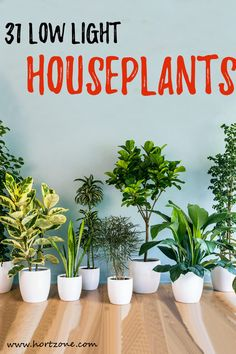 Incorporating your interior spaces with houseplants enhances your quality of life. However, the biggest challenge is finding low light houseplants that can be productively grown indoors. Indoor Plants Low Light, Best Indoor Plants, Low Light Houseplants, Artificial Light For Plants, Best Indoor Trees, Easy Care Indoor Plants, Indoor Tropical Plants, Indoor Flowering Plants, Indoor Herbs