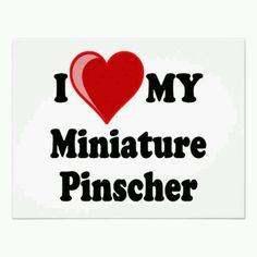I <3 my miniature pinscher