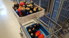 Every dog gets a Kong filled with goodies. Wish all shelters did this! Dog Exerc… Every dog gets a Kong filled with goodies. Wish all shelters did this! Dog Exercise and Enrichment at Austin Animal Center Shelter Dogs, Rescue Dogs, Animal Rescue, Austin Texas, Dog Enrichment, Dog Kennel Cover, Pet Boarding, Animal Boarding, Pet Hotel