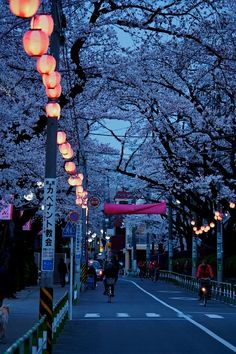 Cherry blossom trees & lanterns add a poetic feel to this city street, which makes it wonderful to walk, bike or drive through.