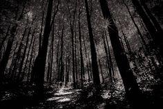 Forest in Universal Twilight #enlight