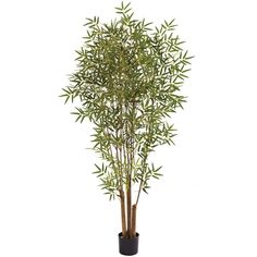 Nearly Natural 6-foot Japanese Bamboo ($109) ❤ liked on Polyvore featuring home, home decor, floral decor, green, japanese trees, japanese home decor, bamboo plant holder, green tree and japanese planter