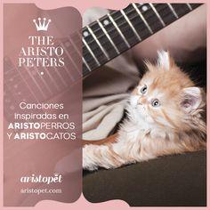 Hoy en THE ARISTOPETERS vamos a hacer un repaso por esas canciones míticas que algunos artistas les han dedicado a perros y gatos, con independencia de que sean o no ARISTOPADRES. Queen y Norah Jones son solo algunos de los artistas que hemos reseñado hoy...¿Quieres saber más? Visítanos en ARISTOPET.COM/THE-ARISTOPETERS