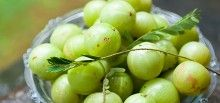 Amalaki, commonly known as Indian gooseberry or amla, is considered one of the most powerful rejuvenating herbs in Ayurveda.