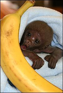 Baby monkey a little help here!