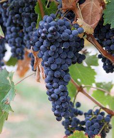 River Bend Vineyard & Winery, Chippewa, WI | Travel Wisconsin