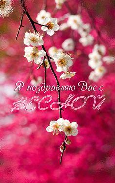 Dandelion, My Arts, Seasons, Happy, Nature, Flowers, Plants, Cards, Floral Arrangements