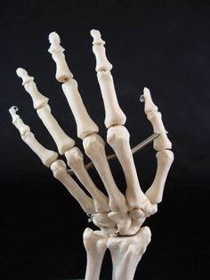 Life Size Hand Joint Skeleton Medical Anatomical Model | eBay