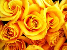 Yellow Roses In a Bunch - Yahoo Image Search Results