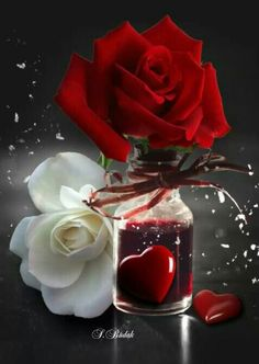 Red and white rose Beautiful Red Roses, Beautiful Love, Beautiful Gardens, Beautiful Flowers, Beautiful Hearts, Hearts And Roses, Rose Images, Heart Wall, Love Wallpaper