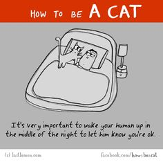 Cat Care Kittens HOW TO BE A CAT: It's very important to wake your human up in the middle of the night to let him know you're ok. Crazy Cat Lady, Crazy Cats, Funny Cats, Funny Animals, Funny Horses, How To Cat, Cat Comics, Cat People, Cartoon People