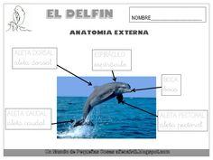 El delfín