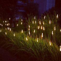 Landscape Architecture, Landscape Design, Garden Design, Landscape Lighting, Outdoor Lighting, Smith Gardens, Deco Luminaire, Garden Lamps, Light Installation