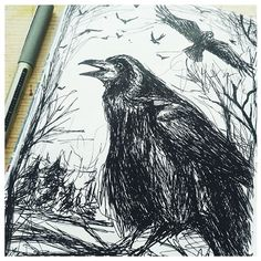 Daily sketch. Not my favorite bird but I see and hear them everyday and it's coming up to Halloween and they're a bit spooky! #dailysketch, #drawing, #sketchbook, #inktober, #rook, #linework, #creativepractice, #bird, #crows, #artwork, #sketches, #nature, #artist, #clarebuswell, #Halloween, #blackpen, #uniball.