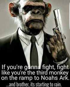 If You're Gonna Fight...