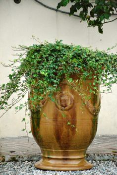 Edera # green colour #  B&B Cà Bianca dell'Abbadessa