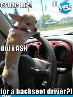 KIm- looks like your dog driving your car LOL!