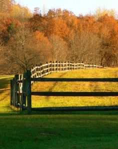 Fence row near Reidsburg, PA - Clarion County.