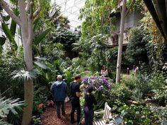 #NYU #London | Barbican Conservatory