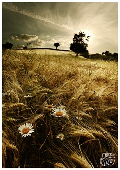 Flowers and Wheat by Alfonso Della Corte
