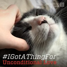 """#IGotAThingFor unconditional love,"" said all pets everywhere!"