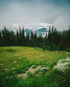 The hills are alive... #mountains #nature #pnw #westcoast #beauty #wonderful_places #instagood #amazing #epic #hike #fujifilm #hills #olympics #instalike #photographer #postoftheday #gorgeous #beautiful #love #washington #life #green #upperleftusa #mountain #life #camping #vsco #lovely #postoftheday #travel by codycowanphotography