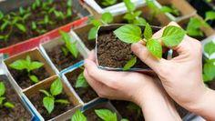Gardening 101 - Spring Gardening Guide.  Basic tips.