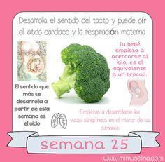 BebeBlog by mimuselina: Semana 25 embarazo. Tamaño y evolución del bebé @m...