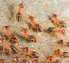 Termite Damage To Wood Floor Jane S Home Repairs