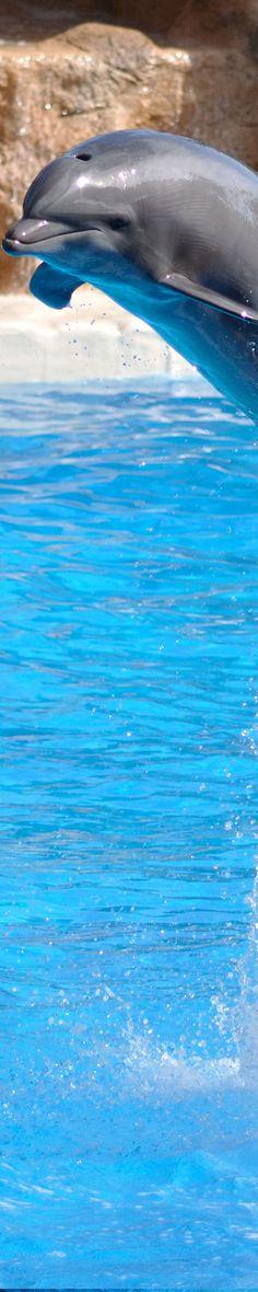 Dolphin....so beautiful