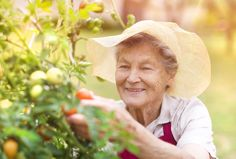 """Check out the GreenPrints blog to find out, """"Why Gardening is Good for Your Health"""". #Gardening #Health #GreenThumb #GreenPrints #GoOutside #Nature"""