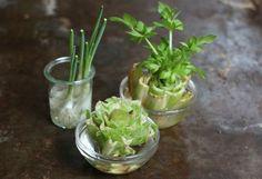 Regrow Vegetables in Water