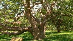 tree - Google Search