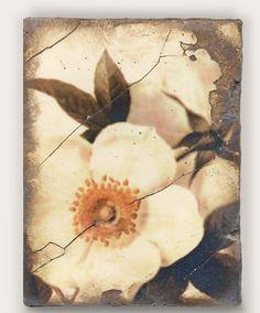T 114 Wild Rose