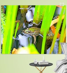 Frosch im Teich Poster - Leopold Brix Colors, Animals, Artist Canvas, Water Plants, Canvas Frame, Photo Wallpaper, Wall Canvas, Animales, Animaux