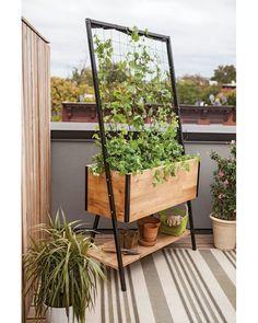 x Elevated Cedar Planter Box Planter Boxes: Standing Height Cedar Raised GardenPlanter Boxes: Standing Height Cedar Raised Garden