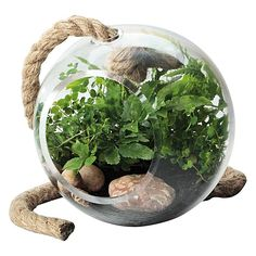 Capture nature in your décor with the charming Little Jungle Orbit Terrarium from Maxwell & Williams.