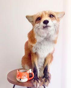 •Juniper the Fox-cute Juniper <3