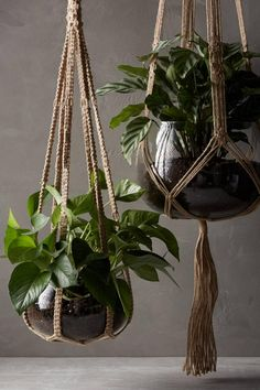 These jute macrame plant hangers come with the recycled glass planter- just add a plant and youre ready to go. These jute macrame plant hangers come with the recycled glass planter- just add a plant and youre ready to go. Indoor Garden, Indoor Plants, Garden Pots, Garden Ideas, Patio Plants, Succulents Garden, Decoration Plante, Home Decoration, Beautiful Decoration