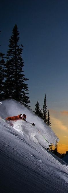 #skiing Photograph by Erik Seo