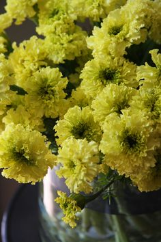 marigolds lime green