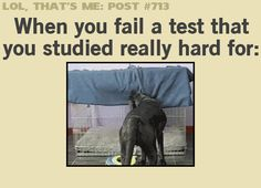 When you fail a test... (gif)