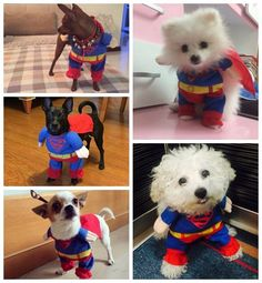 Its a bird, its a plane, no, its Superdog! Make yours a Dog of Steel with our adorable Superman Dog Costume! https://www.dressyourdoggy.com/collections/funny-dog-costumes/products/superman-dog-costume?variant=32517067538