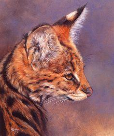 Aldrich Edward - Serval