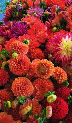 Amazing dahlias at Pike's Market in Seattle, WA.