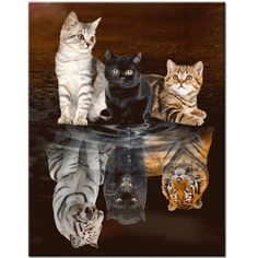 Diy Diamond Painting Cats tigers Full Square/round drill Resin Rhinestones Mosaic full Embroidery display Cross Stitch Home Decor - Katzen Cute Little Animals, Cute Funny Animals, Cute Dogs, Cute Cat Wallpaper, Animal Wallpaper, Cute Cats And Kittens, Kittens Cutest, Funny Kittens, Ragdoll Kittens